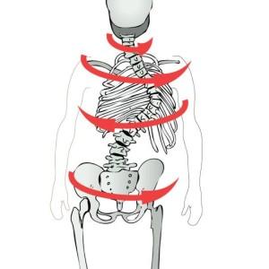 Scolio-Pilates Illustration